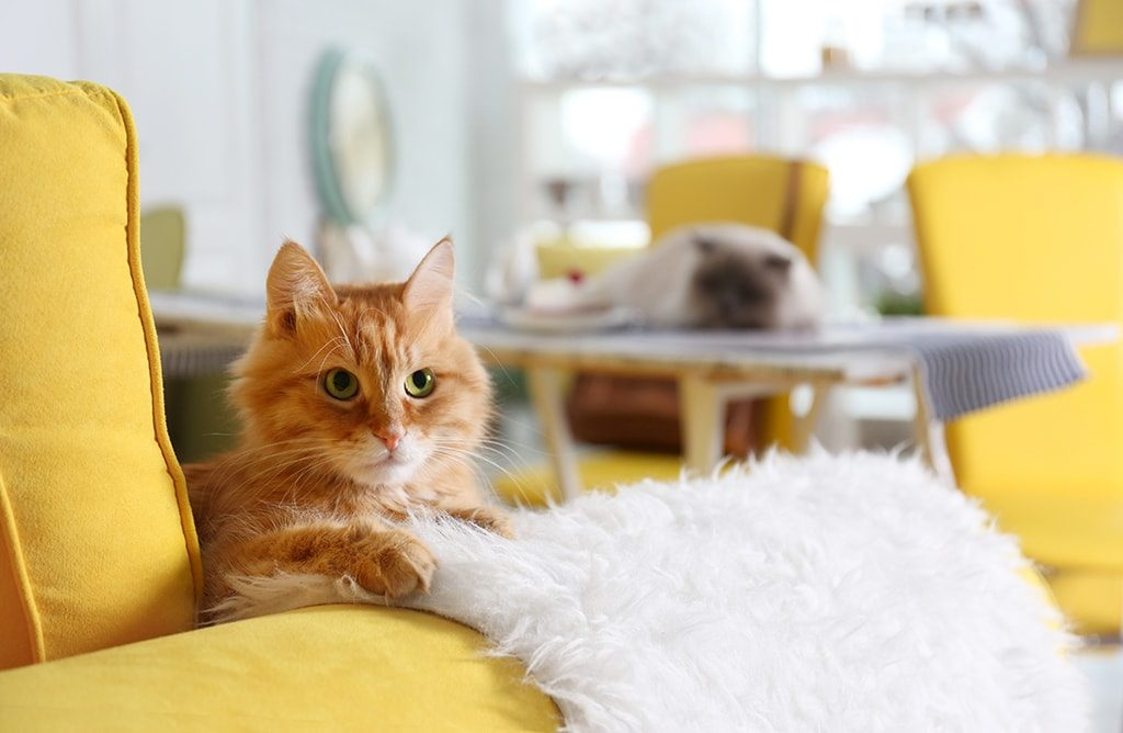 Image result for cat smell in house